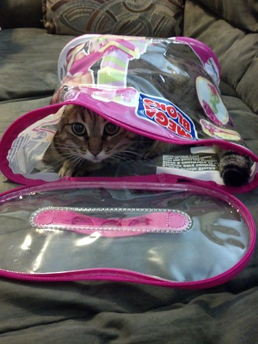 ZOMG, cat in a bag
