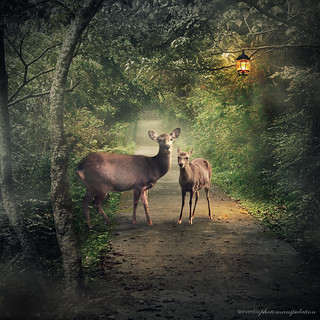 deers on path