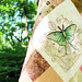 Nature's Curiosities Quilt - Moth Design