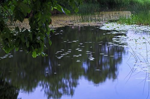 river estonia pentax eesti jõgi k7 soomaa viljandimaa soomaarahvuspark pentaxk7 hallistejõgi kõpuvald tipuküla