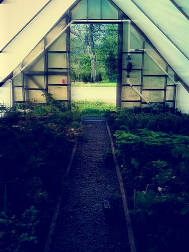 A greenhouse at Greenwood Nurseries.