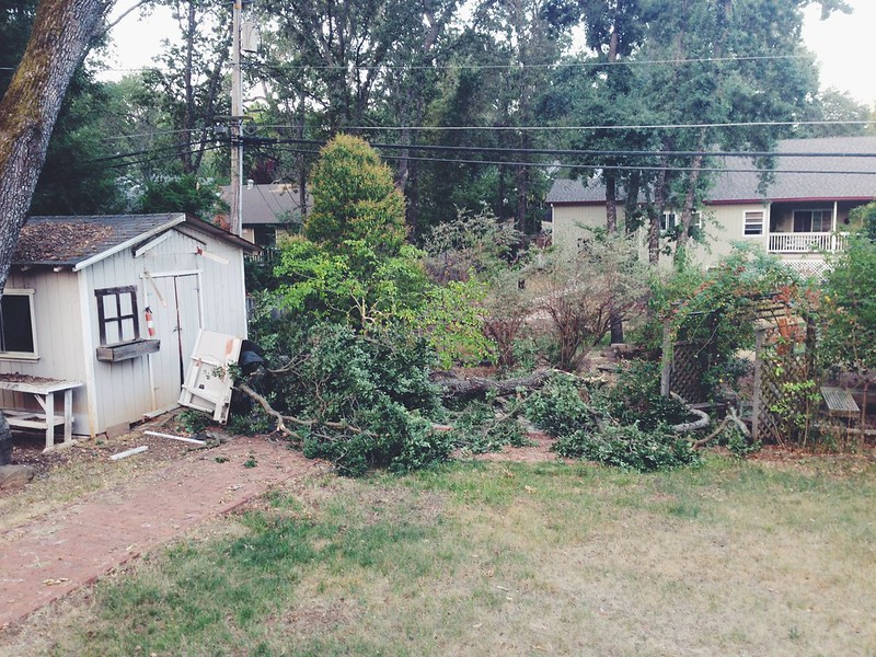 Tree Damage to the Shed