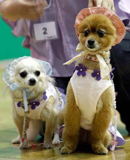 sfilata canina razza e meticci