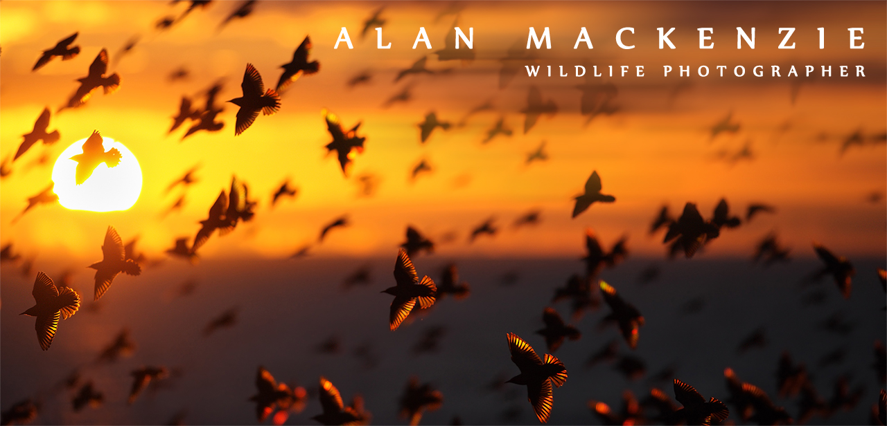 Alan MacKenzie Photography
