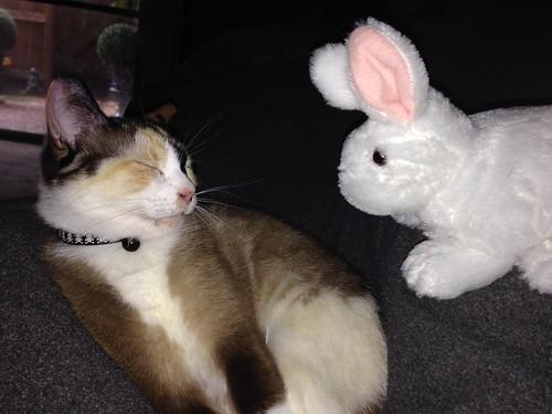 Tinny and Bunny