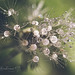 After the rain by k4♥wea