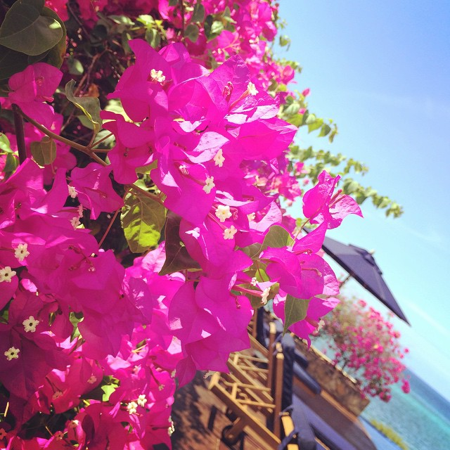 Hello there, summer 😊🌞🌺 #bougainvillea #islandfun #travelingjourno #bohol #morefuninthephilippines