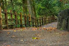 A small walk through Tumwater Falls in the Autumn. #pnavarrophoto #naturemeetsurban