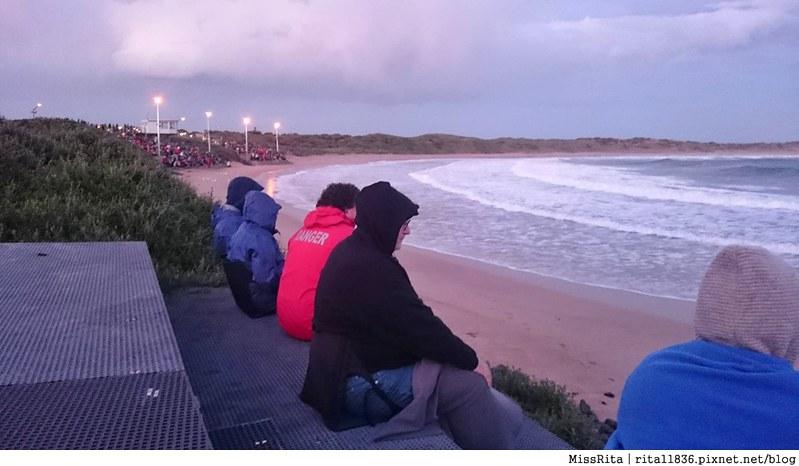 KKDAY 墨爾本自由行 melbourne gowesttours kkDAY墨爾本 墨爾本企鵝 澳洲自助 墨爾本自助 菲利浦島 菲利浦島交通 墨爾本必去 墨爾本酒莊 月光野生動物 Nobbies 墨爾本企鵝歸巢 墨爾本一日遊 菲利普島一日遊,小企鵝歸巢遊行114