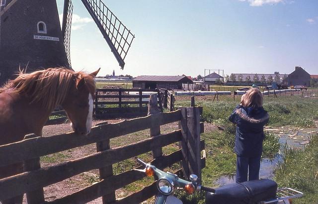 Rijnsburg, molen De Hoop Doet Leven (1976)