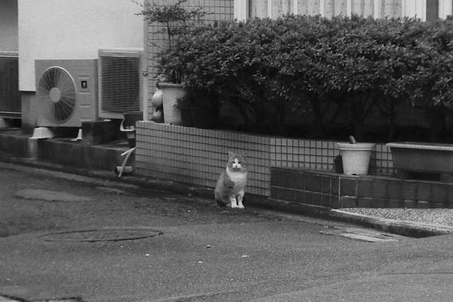 Today's Cat@2016-11-21