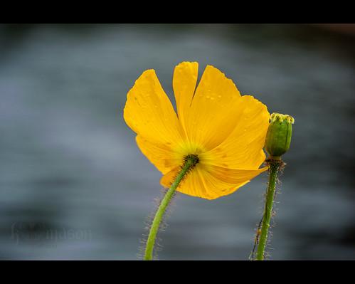 usa flower macro sc water spring blossom southcarolina petal bloom murrellsinlet sigma150mmf28exapodghsmmacro