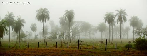 fog paraguay pindo