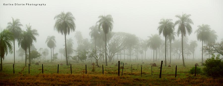 Panorama Niebla en el Amambay