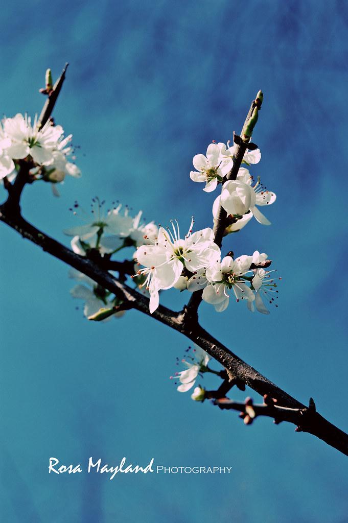 Spring Flowers 8 7 bis