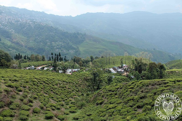 Happy Valley Darjeeling