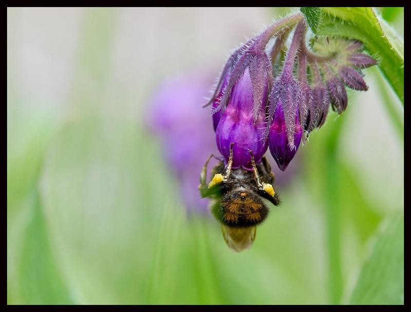 Searching Honey