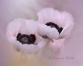 Jill's Pretty Pink Poppies