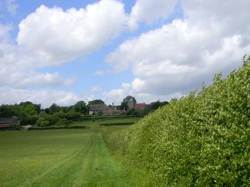 Hedge to Luddesdown