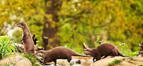 Find out everything you can about your wildlife subject
