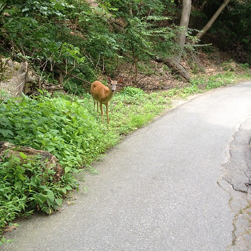 Yea this is happening on my run right now. Go away stupid deer