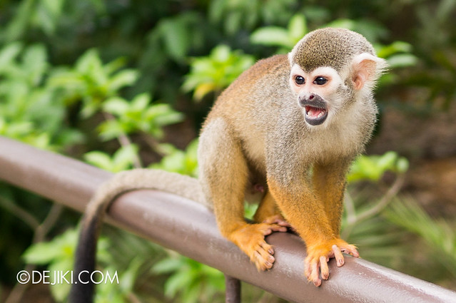 River Safari - Squirrel Monkey 5