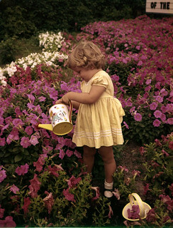 Kerry Arquette watering petunias at the Palmer Nurseries: Osprey, Florida