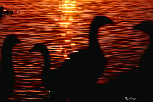 morning blue red wallpaper sky sun india mountains green sports nature water birds silhouette yellow clouds sunrise landscape paradise goose rowing canoeing sunrays sportsman chandigarh sukhnalake reflectiontrees atthecrackofdawn उदयाचल मुँहअँधेरे