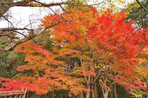 【写真】紅葉 : 京都府立植物園