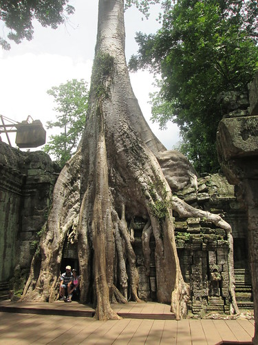 Tree covering temple