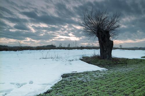 voyage trip sunset cloud snow tree film field analog 35mm landscape spring europe fuji poland polska negative willow journey analogue superia100 reise wielkopolska canoneos300v travet grzybno tarmron2875f28