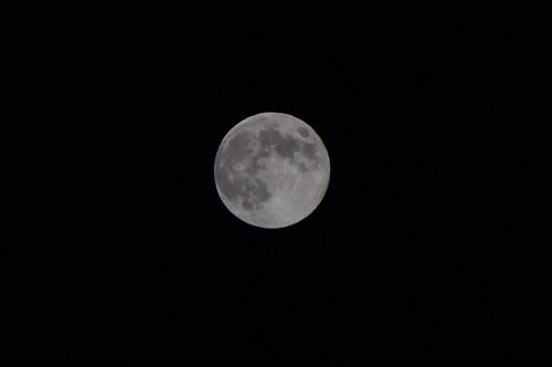 Harvest moon 2013 03