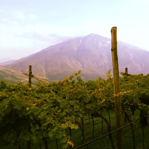 Italian sparkling wine Villa Margon Trento Ferrari