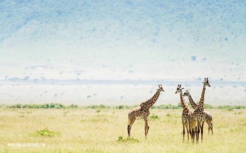 Kenia - Masai Mara 45