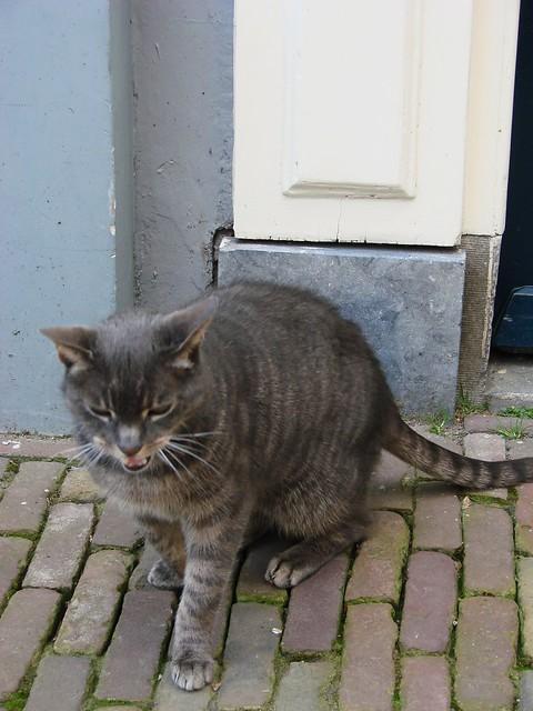 Ruben's Cat