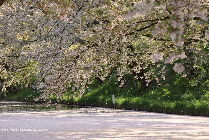 20140502_AomoriSakura_2264 ff