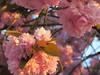 Early May blossom