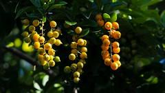 fruit/berries