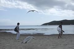 DSCF5302 Playa Ses Salines Ibiza
