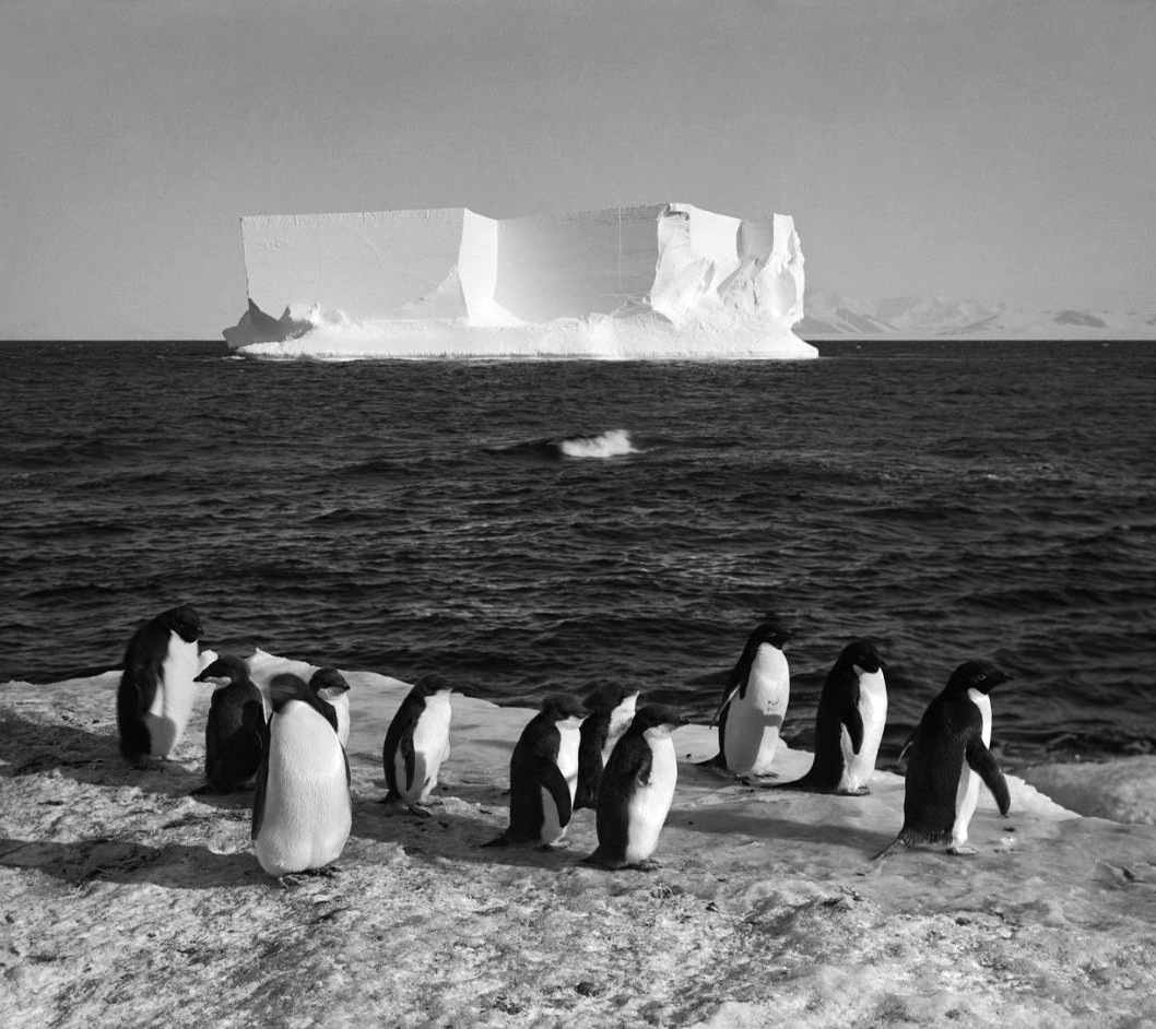 Penguins and a berg at Cape Royds, Scott Expedition, Antarctica