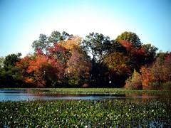 Mill Pond Park -- Autumn (120)