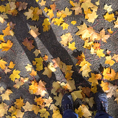 Walking on Leafs