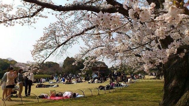 岡山後楽園の桜。 2012.4.8