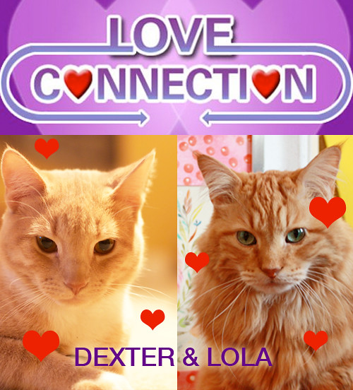 dexter-and-lola