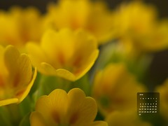 Desktop Wallpaper for June 2013