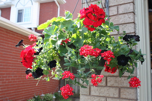 How to Keep Hanging Baskets Looking Good