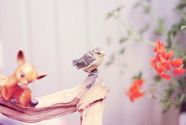 Bye birdy!