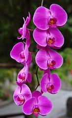 cattleya labiata(0.0), macro photography(0.0), phalaenopsis equestris(0.0), cattleya trianae(0.0), flower(1.0), purple(1.0), plant(1.0), lilac(1.0), flora(1.0), pink(1.0), petal(1.0),