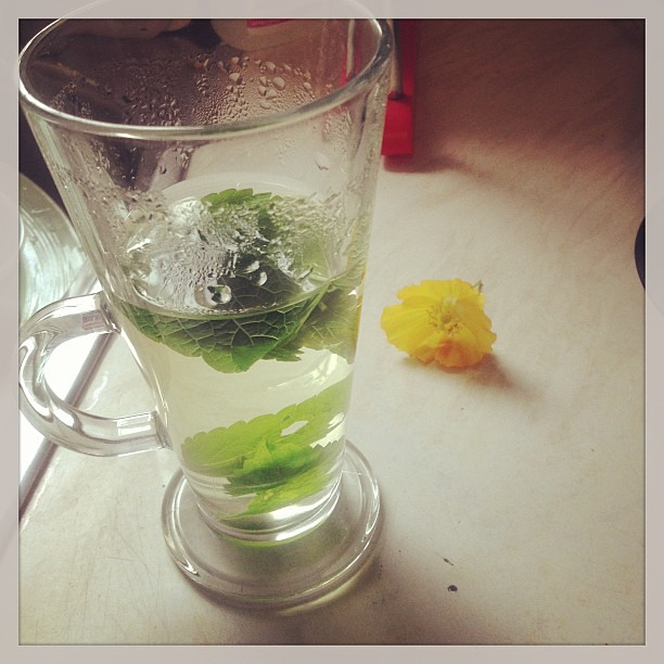 Aaand today is detox day. Steeping lemon balm to add to the green smoothie