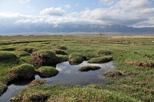 Marsh in grassland, Barkol バルクル草原の湿地